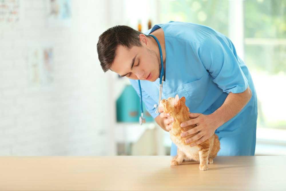 odors veterinary clinic